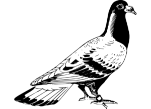 papapishu-carrier-pigeon-2